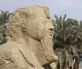 Découverte en Égypte : Oasis et désert Libyque