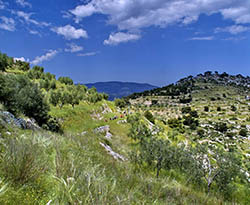 Découverte en Italie : POUILLES du promontoire du Gargano aux ''trulli'' d'Alberobello