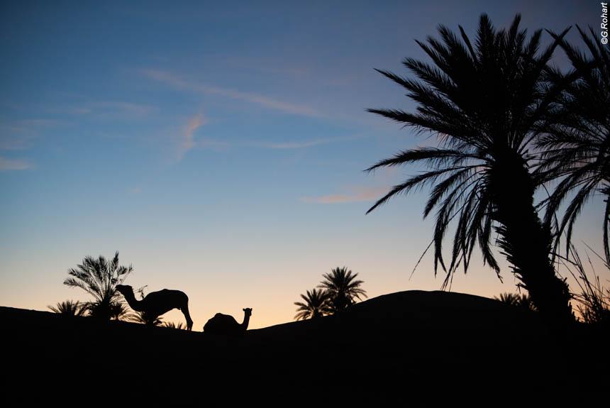 Rencontre, marocaine, en, belgique Por qu hacen erupcin los volcanes?