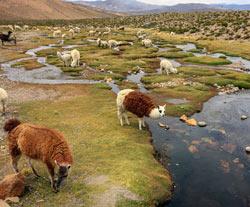 Trekking au Pérou : Cités perdues du Vilcabamba.