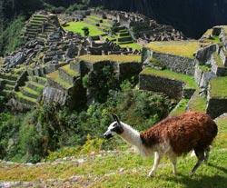 Découverte au Pérou : Du lac Titicaca au Machu Picchu