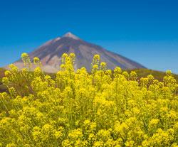 Randonnée en Espagne : Tenerife - La Gomera - La Palma