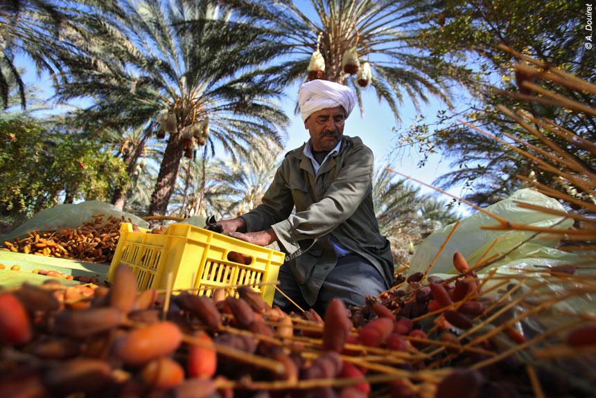 De Djerba à Tataouine