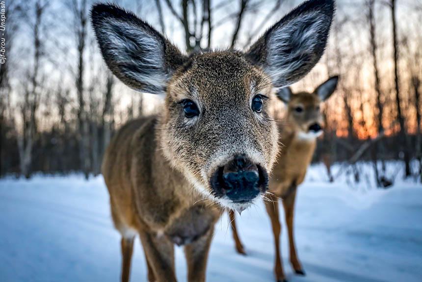 Voyage à pied : Québec, aventure nature