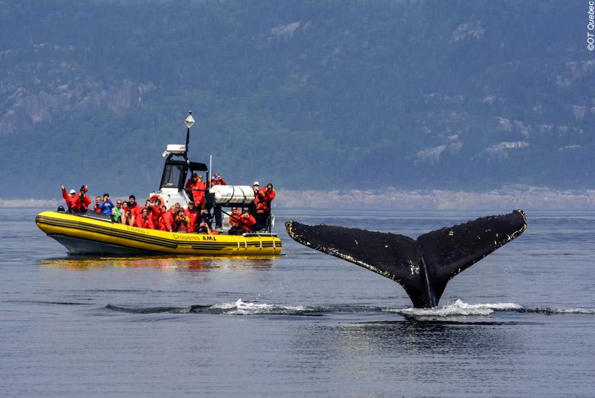 Voyage à pied Canada : Québec, baleines et caribous