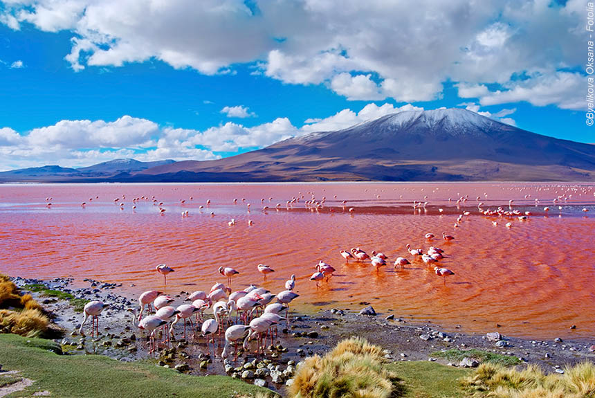 Voyage à pied Bolivie : Altiplano andino, désert des Andes