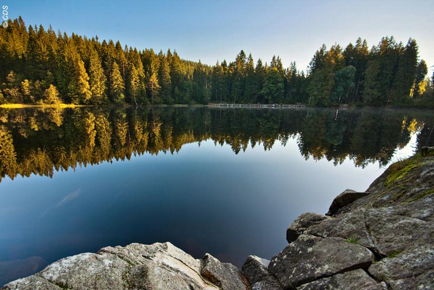 Image Tour de la Haute Forêt Noire