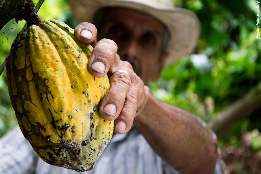 Voyage à pied Équateur : Sur la route du cacao