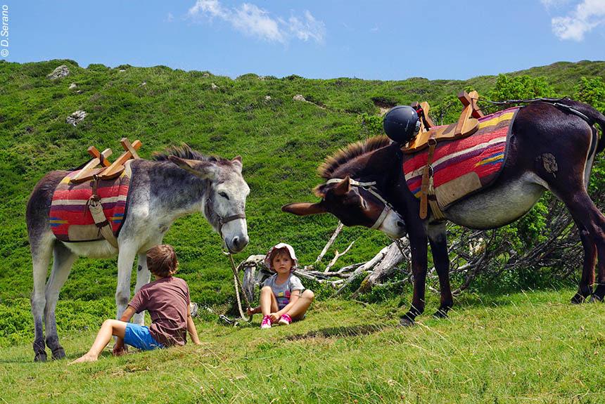 Voyage avec des animaux France : De châteaux en baignades... avec des ânes en Pays Cathare