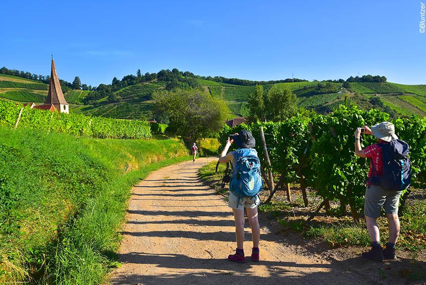 Voyage à pied France : Alsace : villages, châteaux et forteresses médiévales