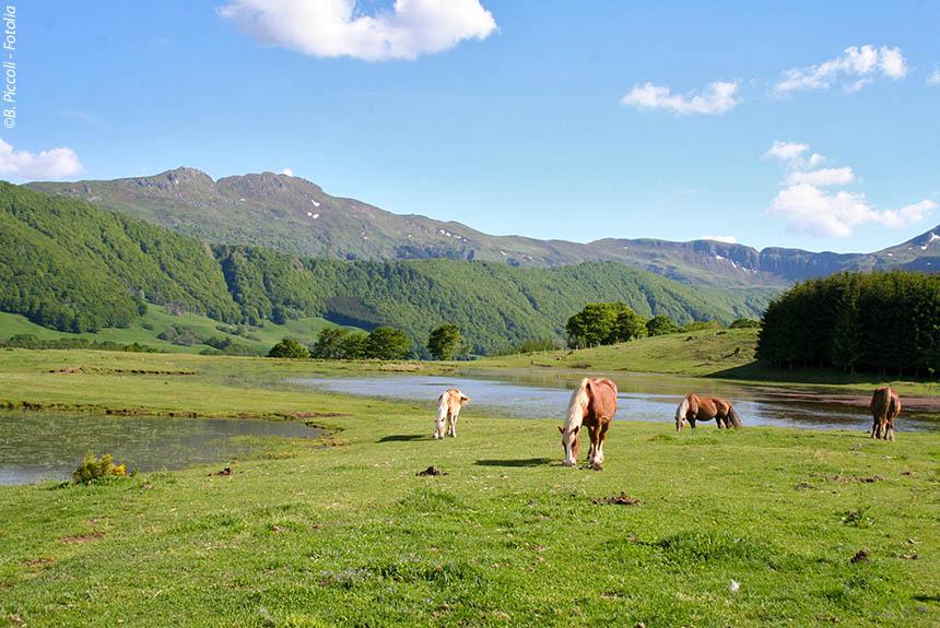 Image Une autre Auvergne, du Sancy au Cantal.