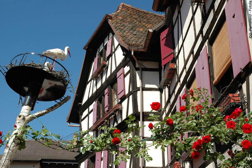 Voyage à pied : Alsace, de vins en châteaux