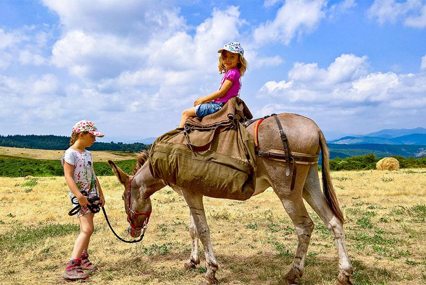 Voyage avec des animaux France : Les Cévennes du Sud avec des ânes