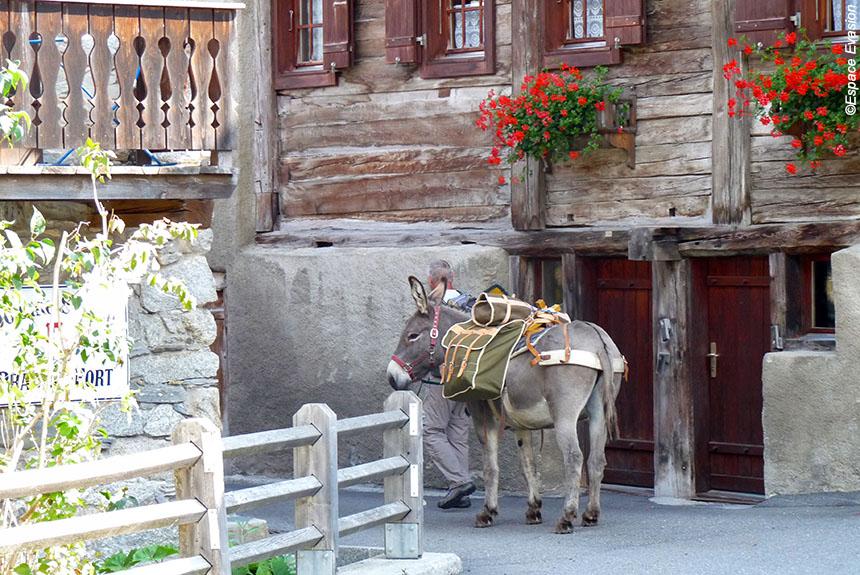 Voyage avec des animaux : Le Tour du Mont Blanc Nord, en famille avec des ânes de Courmayeur à Montroc.