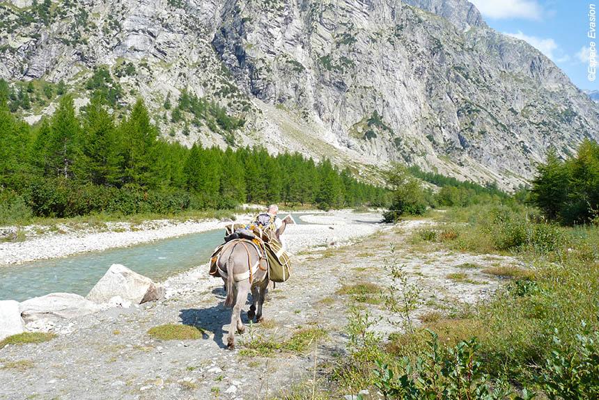 Image Le Tour du Mont Blanc Nord, en famille avec des ânes de Courmayeur à Montroc.