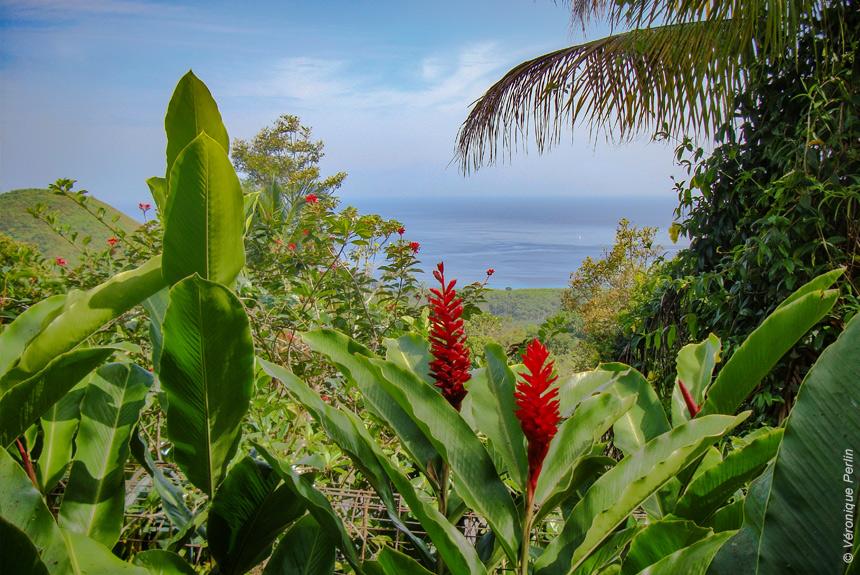 Voyage à pied : L\'île Papillon