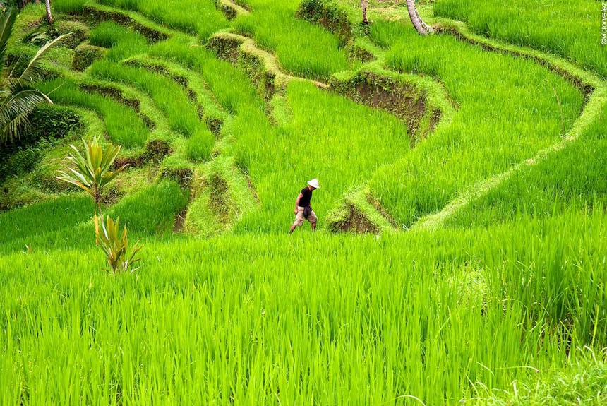 Voyage à pied Indonésie : JAVA, BALI, Chef-d\'œuvre des dieux