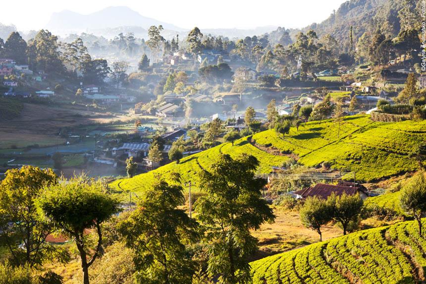 Voyage à pied : Rando nature-culture à Ceylan