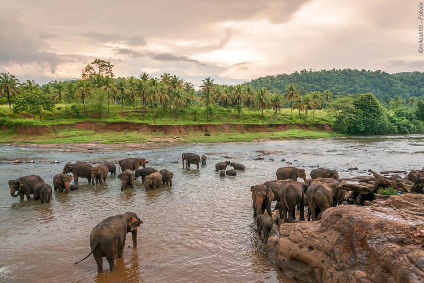 Voyage à pied Sri Lanka : Ex-Ceylan en famille !