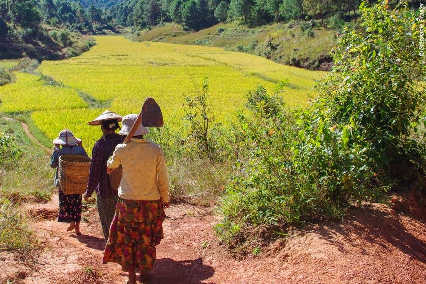 Image Balades birmanes en liberté