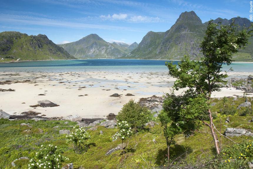 Image Sommets et crêtes des îles Lofoten