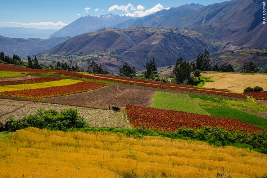 Voyage à pied Pérou : Du Machu Picchu à la Cordillère Blanche