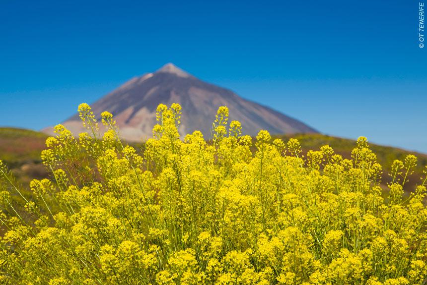 Voyage à pied : Tenerife - La Gomera - La Palma