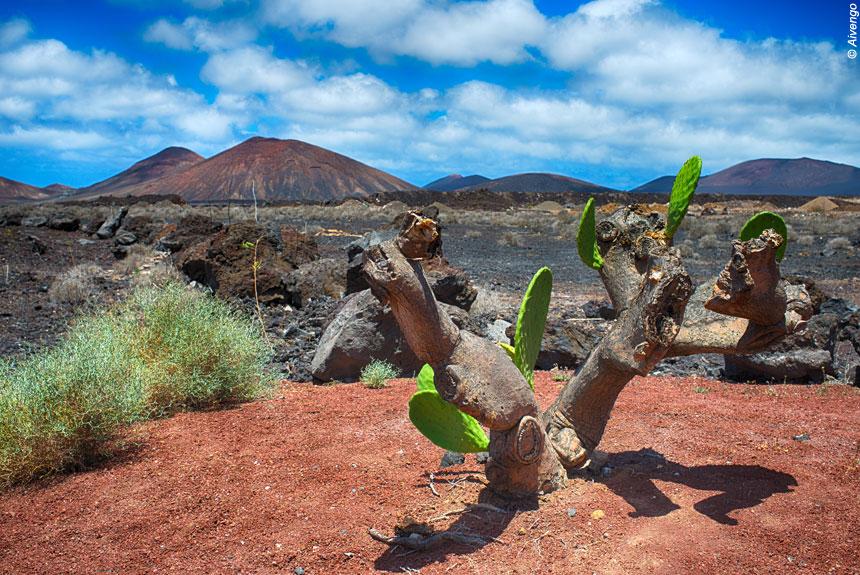 Voyage à pied Espagne : Lanzarote, Soleil d\'hiver