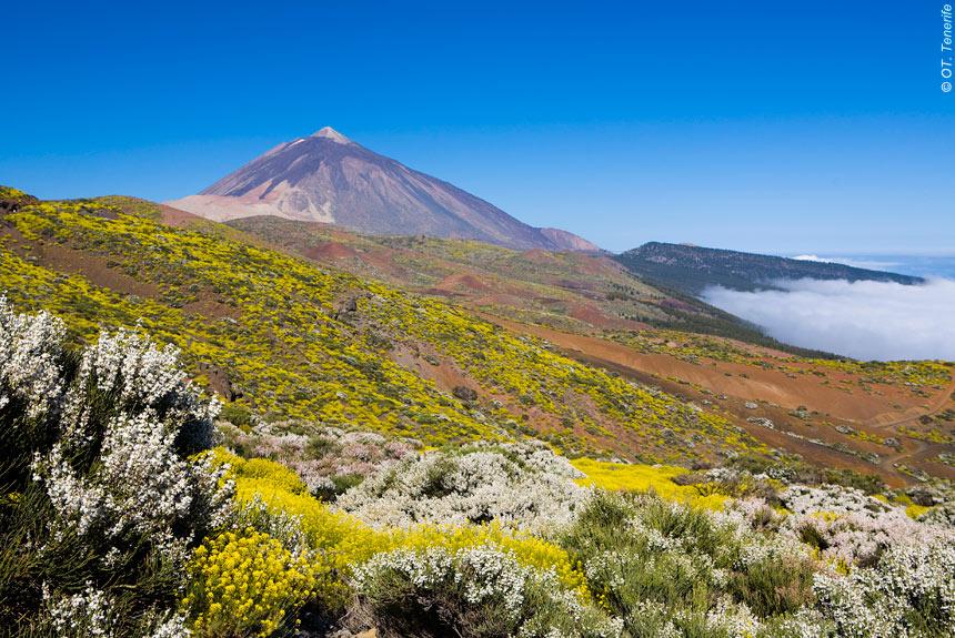 Voyage à pied Espagne : Tenerife, l\'île de l\'éternel printemps