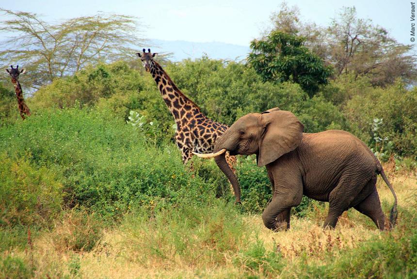 Image Du Kilimandjaro aux grands parcs du pays Masaï
