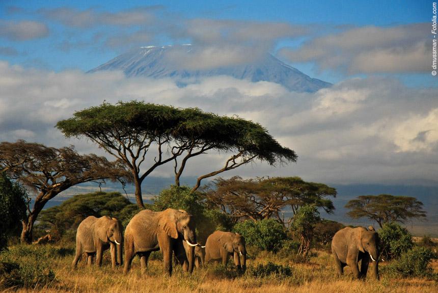 Image Terres masaï, rando, rencontres et safari