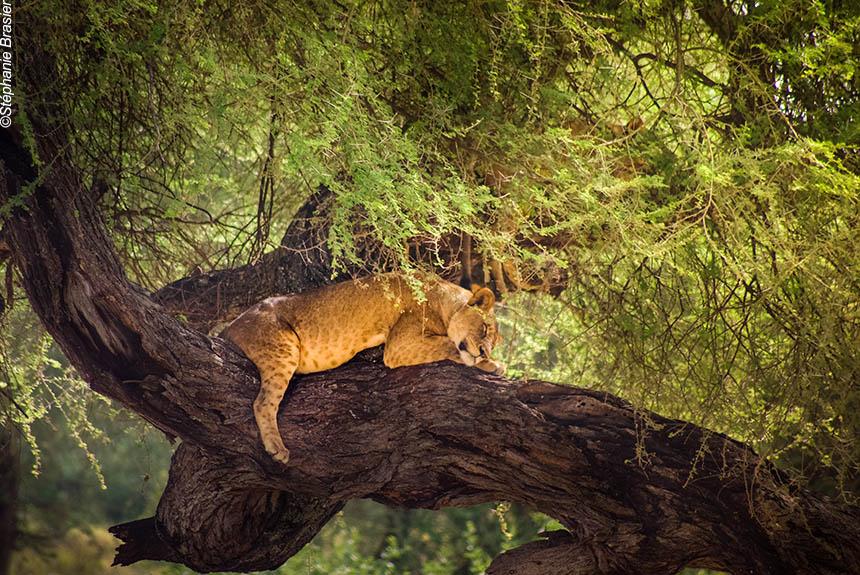 Voyage avec des animaux Tanzanie : Symphonie africaine
