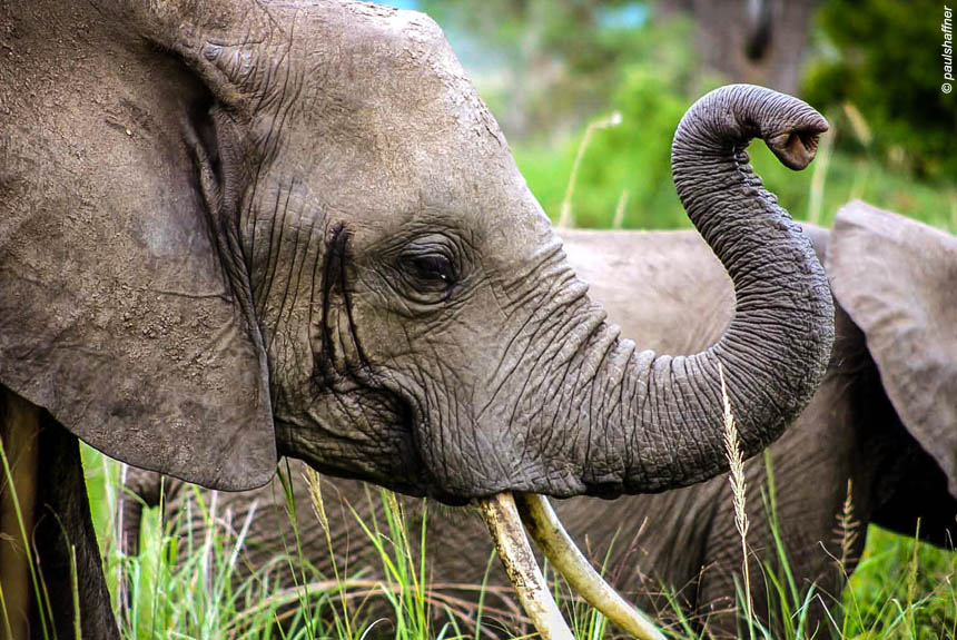 Voyage avec des animaux : Jumbo l\'Afrique